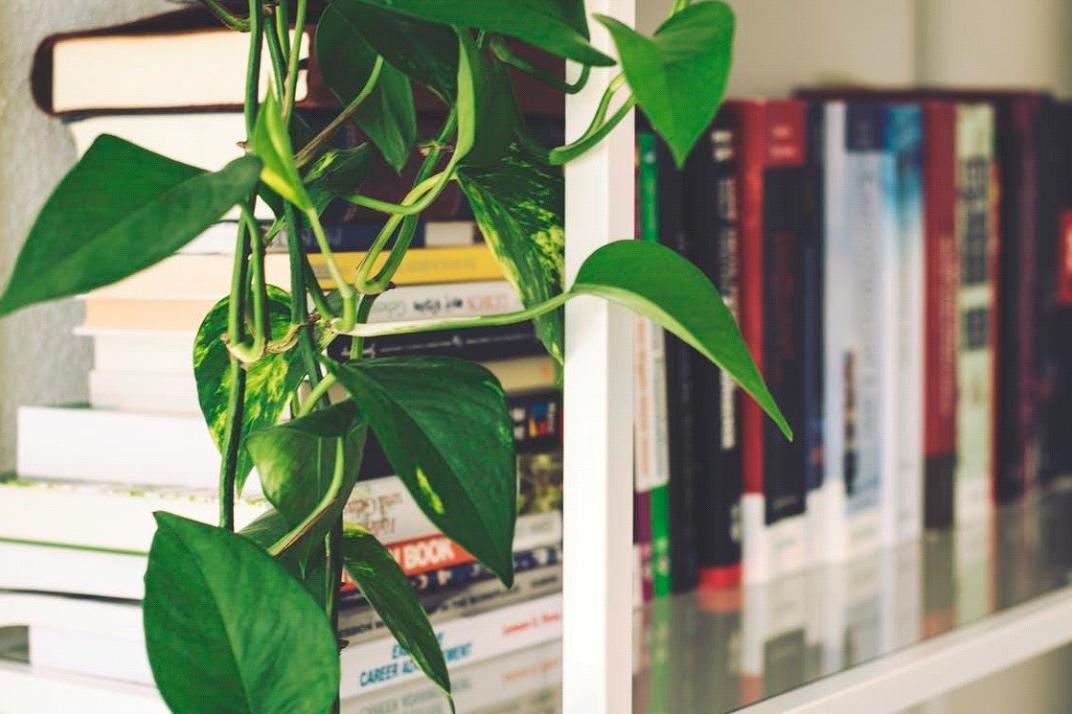 O design biofílico nos aproxima da natureza e torna o ambiente home office mais agradável
